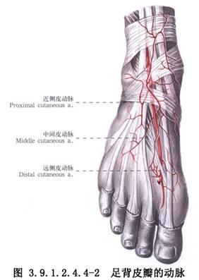 复合膜_足背皮瓣移植术_英文_拼音_什么是足背皮瓣移植术_医学百科