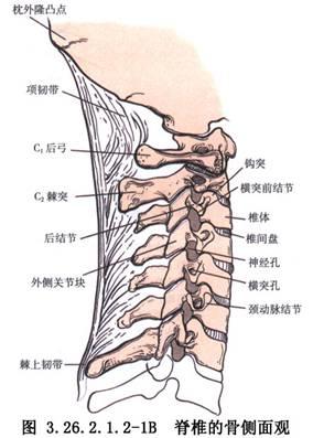 颈椎前路手术图解