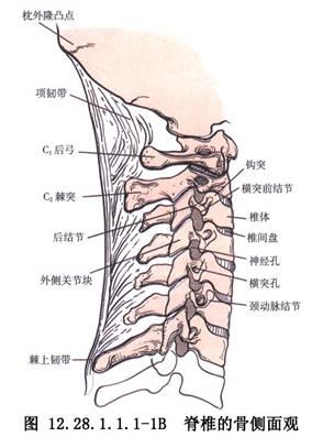 全身关节结构示意图
